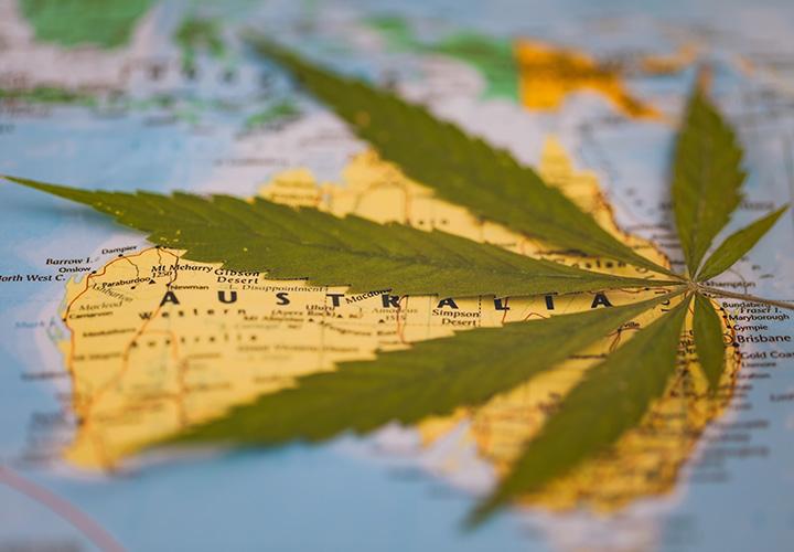msra-australia medical cannabis